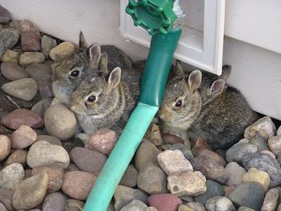 Four good bunnies