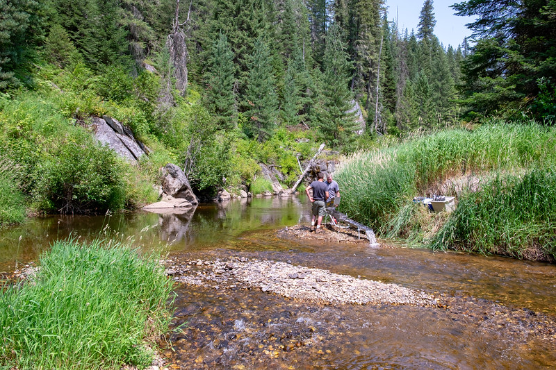 "Searching for the ""shiny"" in Orofino Creek"