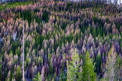 Sherman Pass, Ferry County, Washington