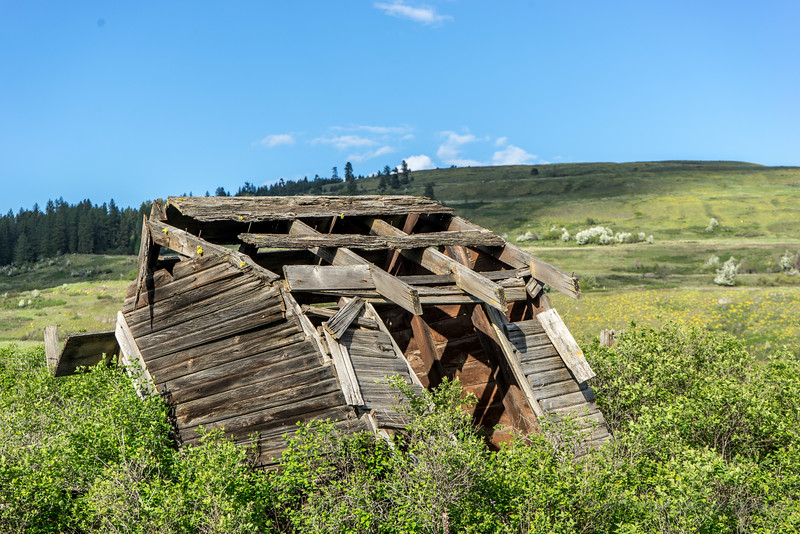 The Out house behind the Larsen School in Stevens County, Washington.