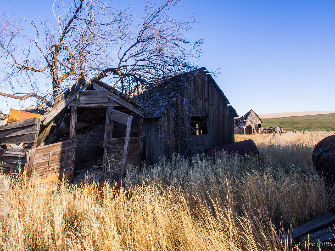 20131121-PB210088 Team Rust ~ Douglas County