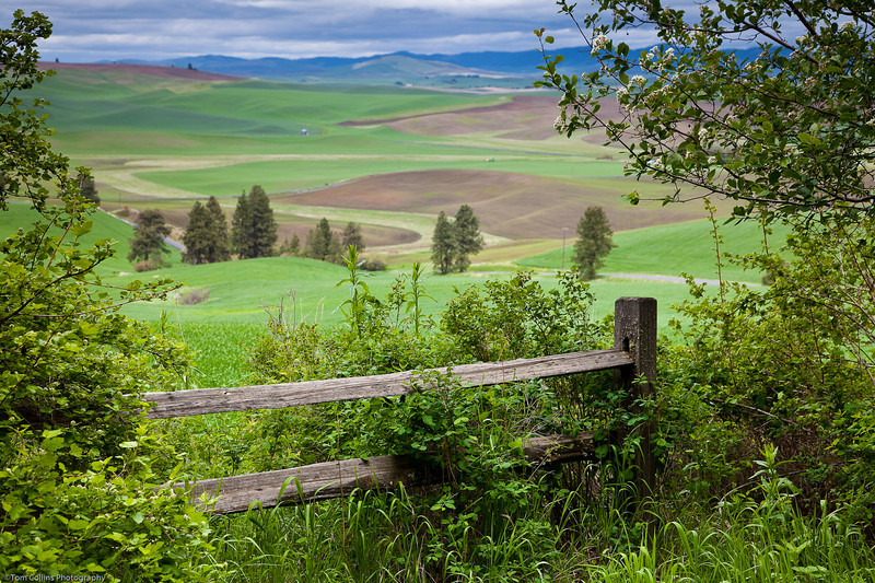 Looking out over the Palouse from Chief Kamiakin Park located just south of Palouse, WA.