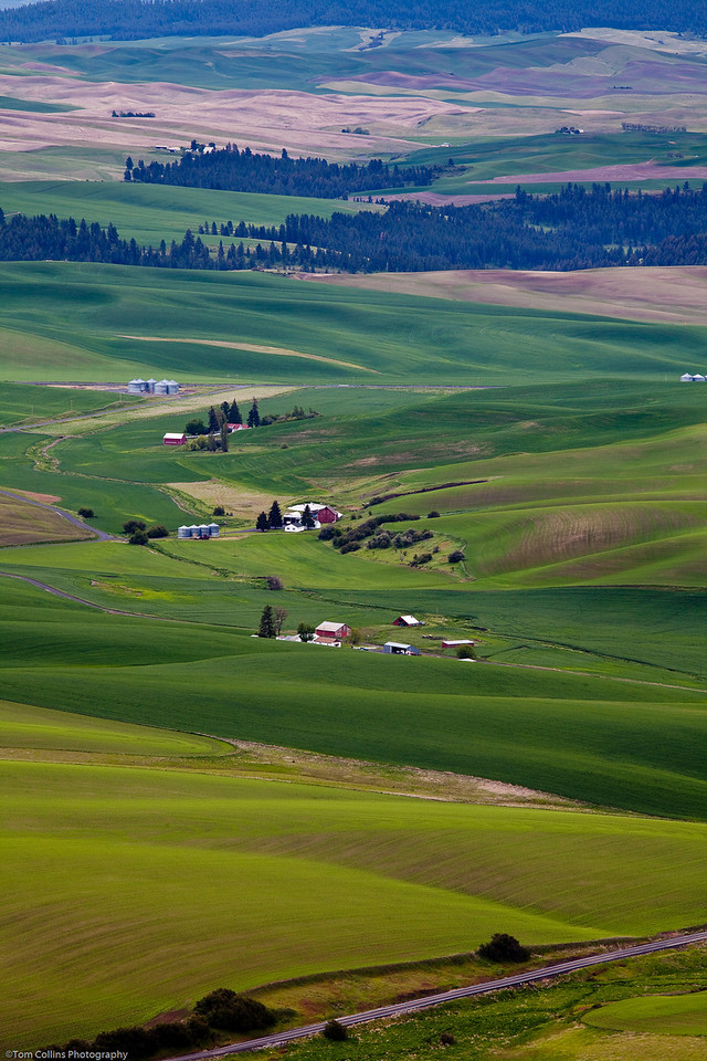 Looking out over the Palouse from Steptoe Butte.