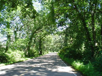 The UW-Madison Arboretum. Miles of wooded roads and paths, near the house I lived in until I was 3 years old.
