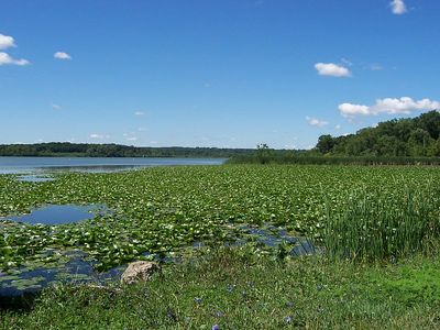 Lilypads on Lake Wingra, at Vilas Park just behind my old high school (and Chris Farley's) in Madison.