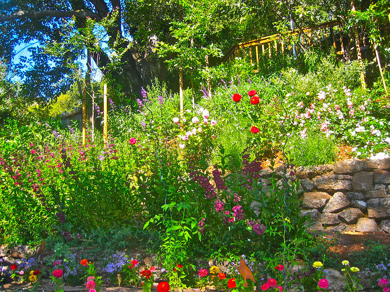 Colorful mediterranean plants thrive in this new garden.