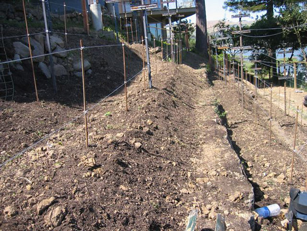 A closer look at the native soil just amended with organic compost.