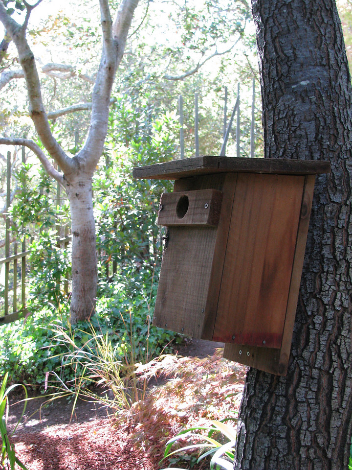 A bluebird box...they eat insects and mosquitos.