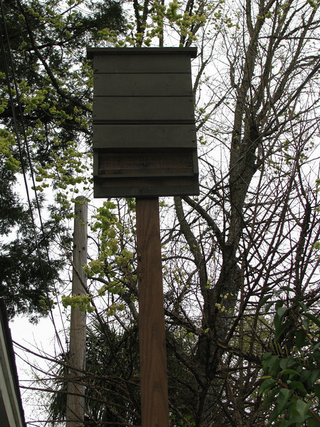 A new bat box in a residential side yard. Bats voraciously eat mosquitos and other insects.