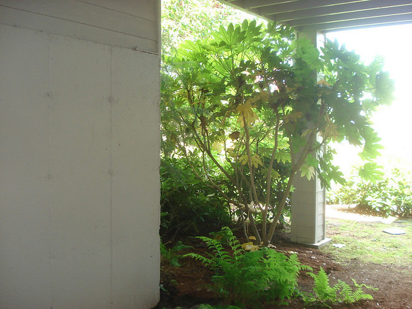 A shot looking out from under the deck - with a tree and ferns growing where the wood-shop is now.