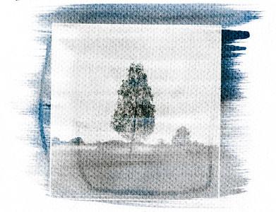 Drzewo z doliny mgieł