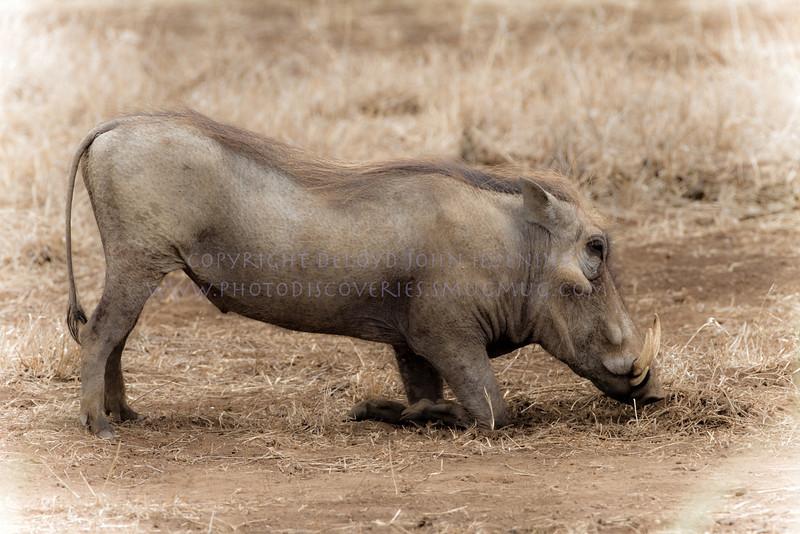 Warthog.  What a creature.