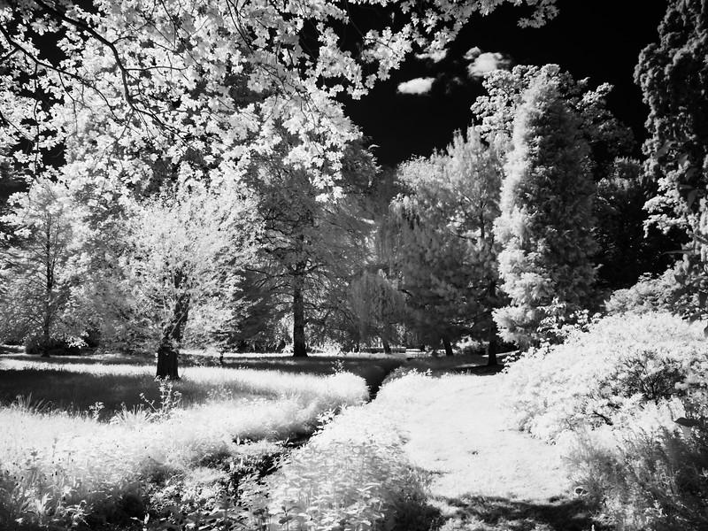 Belton Woods, Lincolnshire