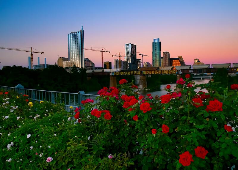 Austin Skyline with Roses