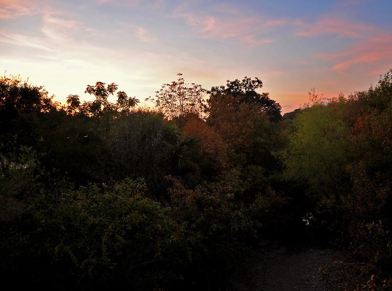 Pease Park sunset