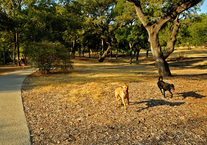 Loose dogs in on-leash area of Pease Park
