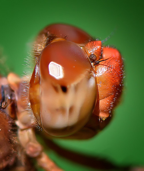 Face of the Neon Skimmer, Austin, Texas