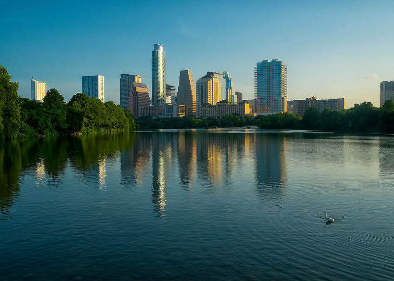 Snowy Egret and Austin Skyline