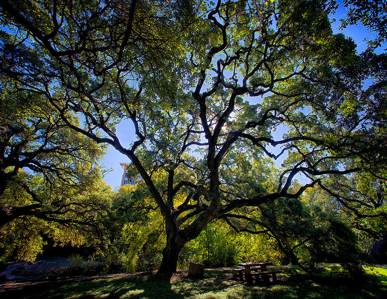 Seiders Oaks, Shoal Creek, Austin, Texas, by Ted Lee Eubanks