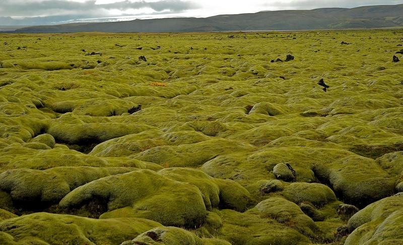 Moss-covered lava boulders, South Coast, Iceland, Sep 2010