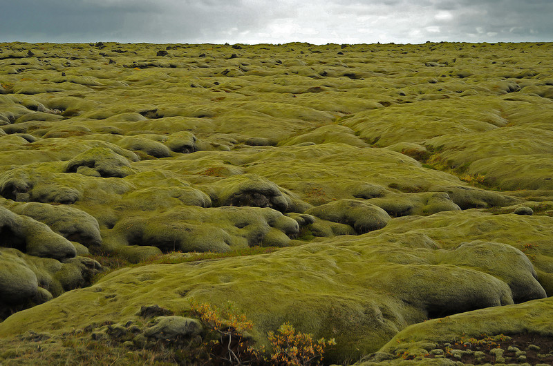 Moss-covered lava boulders, south coast of Iceland, Sep 2010