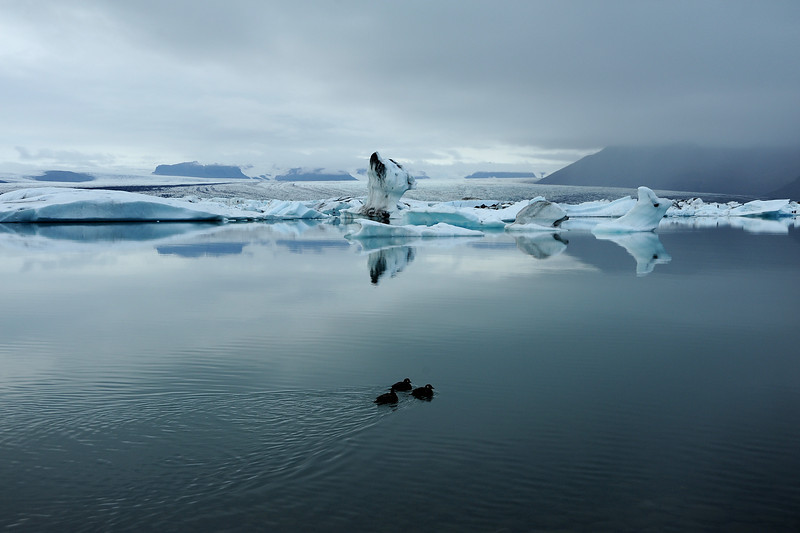 Jokulsarlon glacial lagoon with harlequin ducks, Iceland, Sep 2010