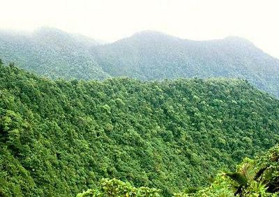 Põlismets  Primeval forest