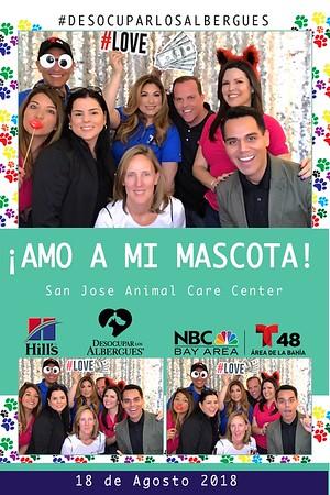 Telemundo | San Jose Animal Care Center
