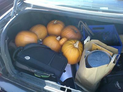 Pumpkin haul!