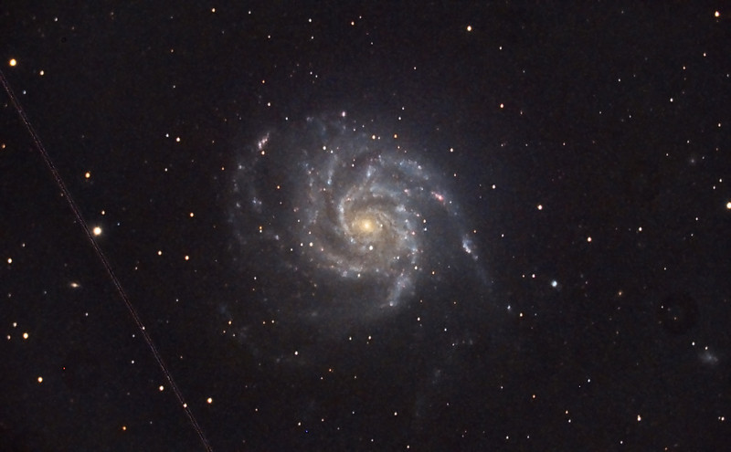 Spiral Galaxy, M101. 5/29/2011. CPC0800 F/6.3. Mitty Wedge. SXVR-M25C. IDAS LPS Filter. Hutech OAG. Lodestar. 5 x 10 minutes. Total 50 minutes. Processed with PixInSight. Clouds appeared earlier than expected. Flats were not taken or applied.