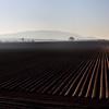 Potato ridges in fileds near Walcot.