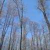 IMG_5389 Panorama.jpg