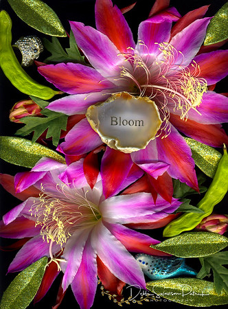 Bloom in Pink