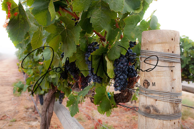 Temecula, CA Wine Country