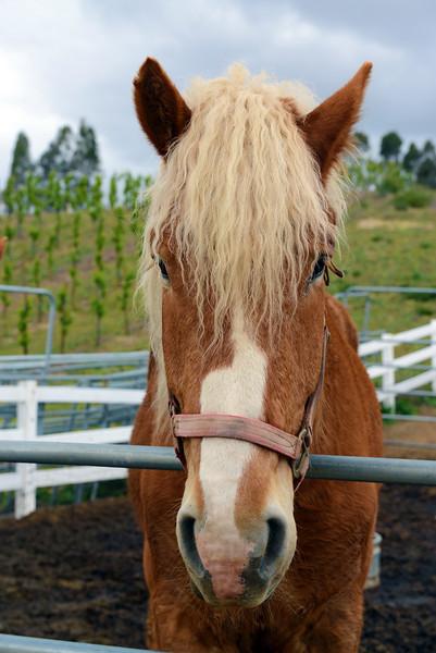 Horse in Temecula