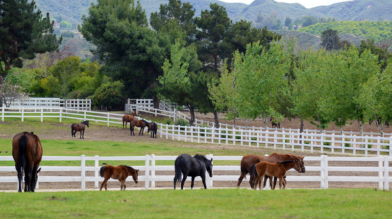 Horses on Temecula Ranch