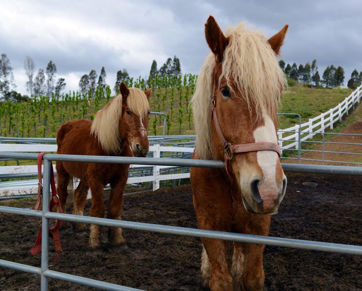 Horses in Temecula