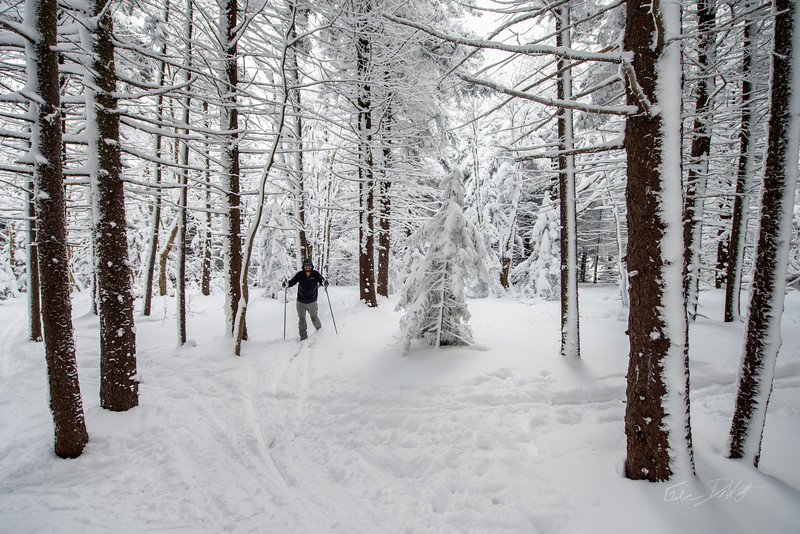 Cross Country Skiing_White Grass_Canaan Valley_West Virginia_photos by Gabe DeWitt_November 28, 2014-5