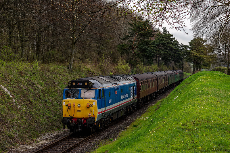 50027 passes through the pine trees, with the 13:00 Alton - Alresford, on 22nd April 2016.