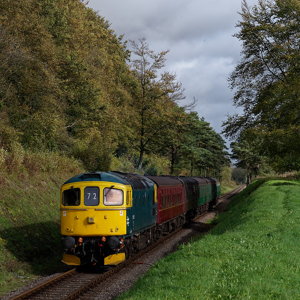 33053 passes through the pine trees, with the 10:50 Alton - Alresford, on 21st October 2017.