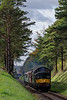 37350 passing through the pine trees, with the 12:25 Alresford - Alton, <br /> on 22nd October 2017.