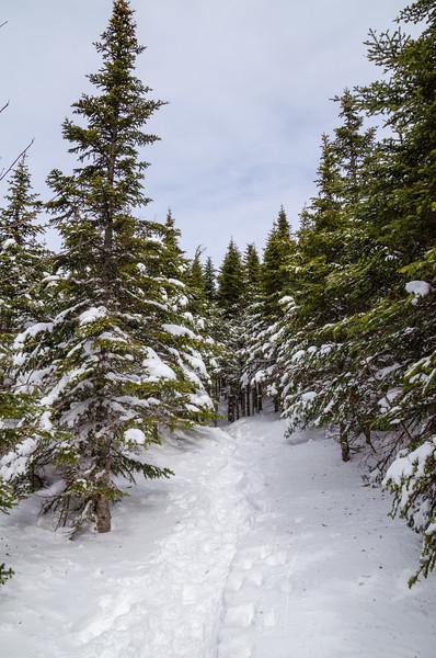 Thinner pines = Almost above treeline.