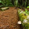 a little trail mushroom