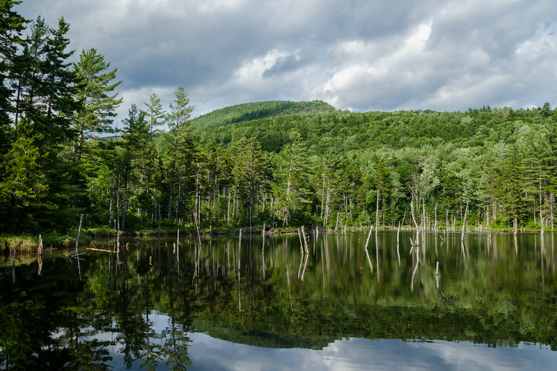 View of mt Bond reflected in a beaver pond.