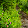 Good wildflowers blooming all along the trails