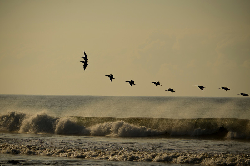 Pelicans riding the air current