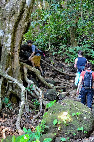 into the jungle we go