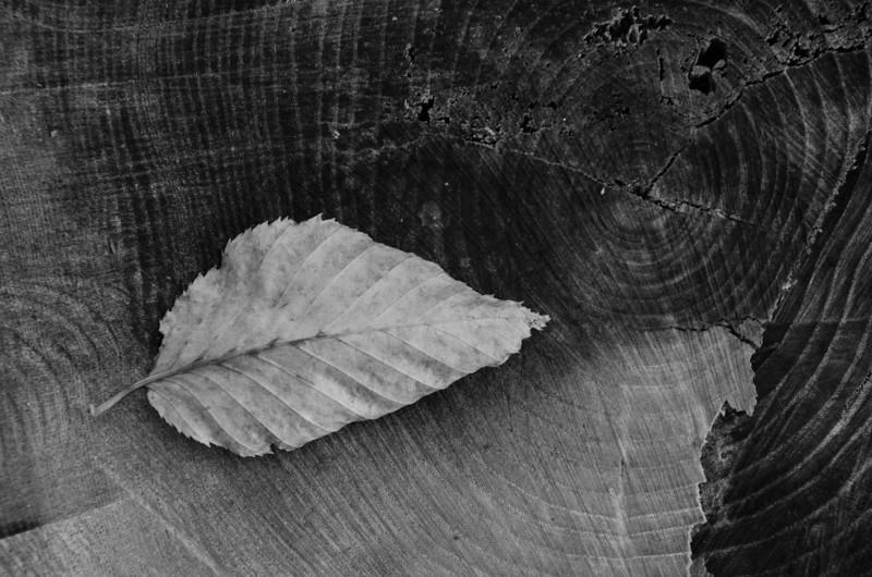 Berkshires Fall Textures 1