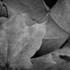 Berkshires Fall Textures 2