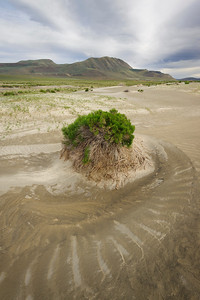 """Lonely Sand Nautilus"" - near Highway 395, OR"